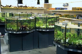 waterplanten kopen aquarium